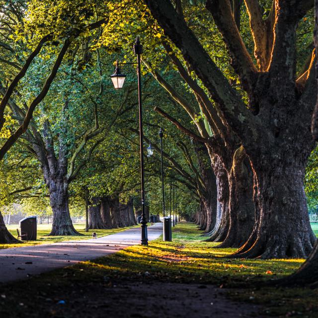 """Sunrise from Jesus Green, Cambridge UK."" stock image"