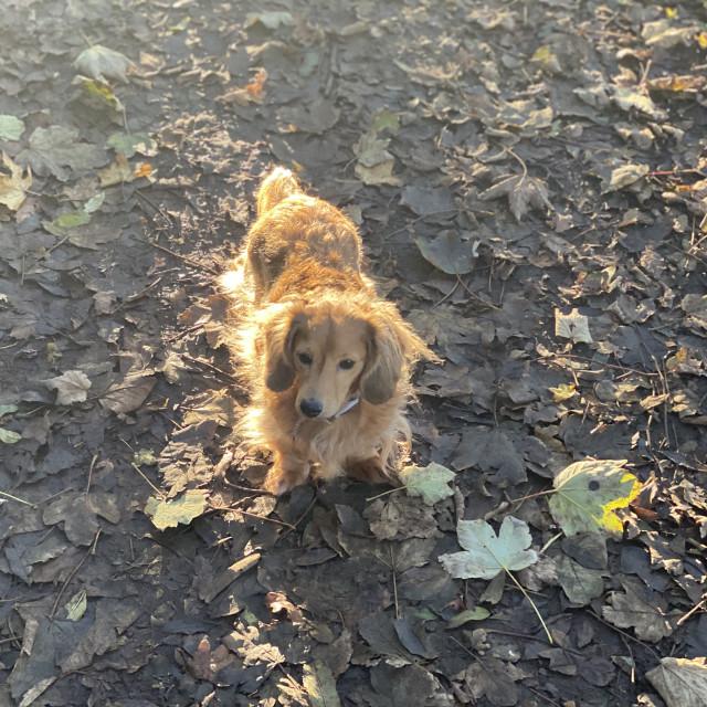 """""""Autumn Dog"""" stock image"""