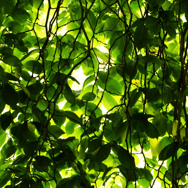 """""""Leafy Canopy"""" stock image"""