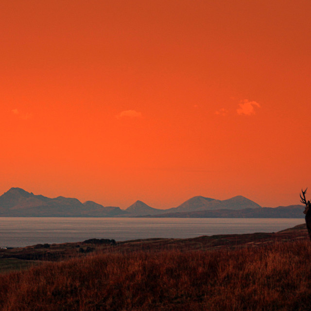 """""""Highland Stag, Gazing Towards Muck, Eeigg and Rum"""" stock image"""