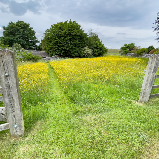 """Grassington Wild Flower Meadow, Yorkshire Dales."" stock image"