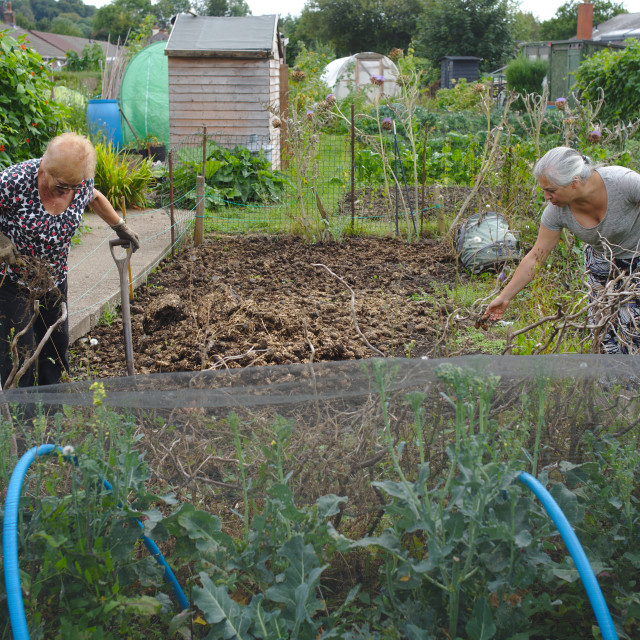 """""""Mother and adult daughter at the allotment"""" stock image"""