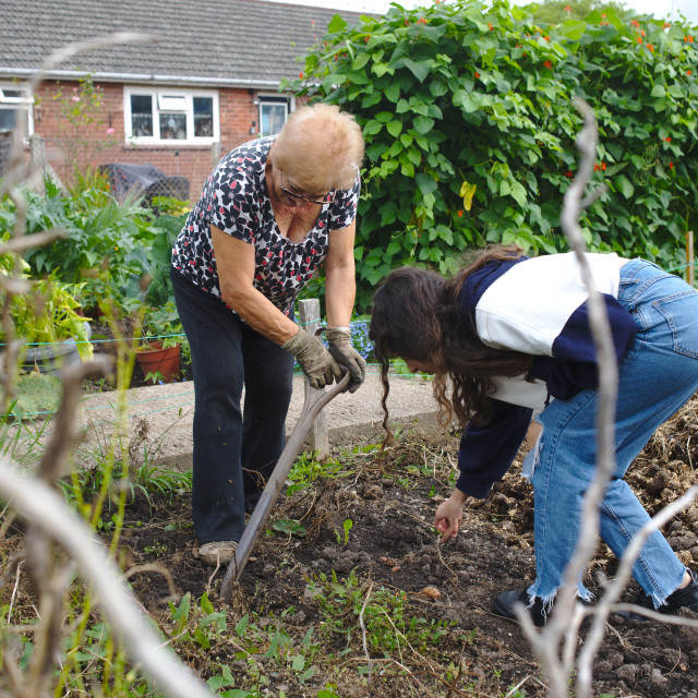 """""""Woman working at her allotment with her granddaughter helping"""" stock image"""