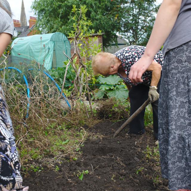 """""""Three generations of women working in vegetable garden"""" stock image"""