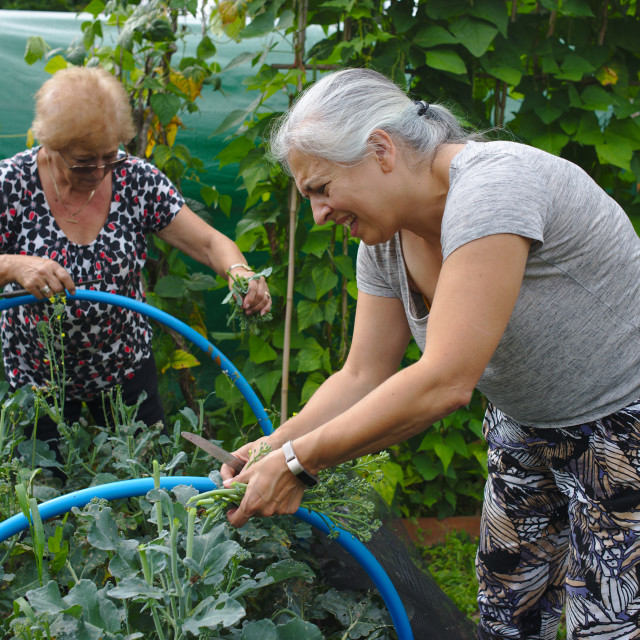 """""""Grandmother and adult daughter working together gardening"""" stock image"""