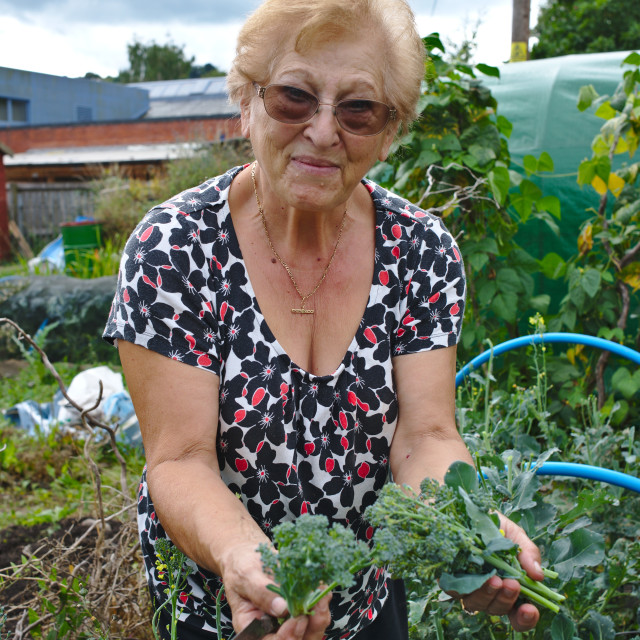 """""""A happy healthy retired woman growing food at her allotment"""" stock image"""