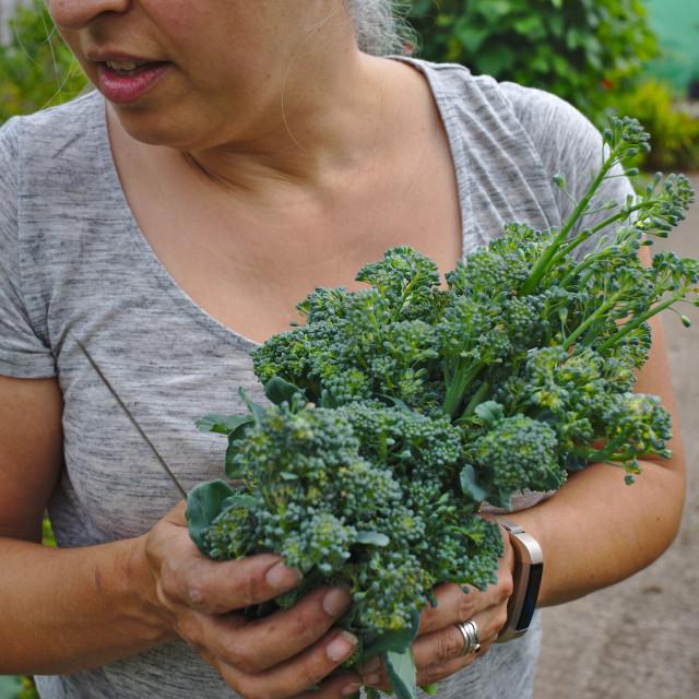 """""""Freshly picked broccoli"""" stock image"""