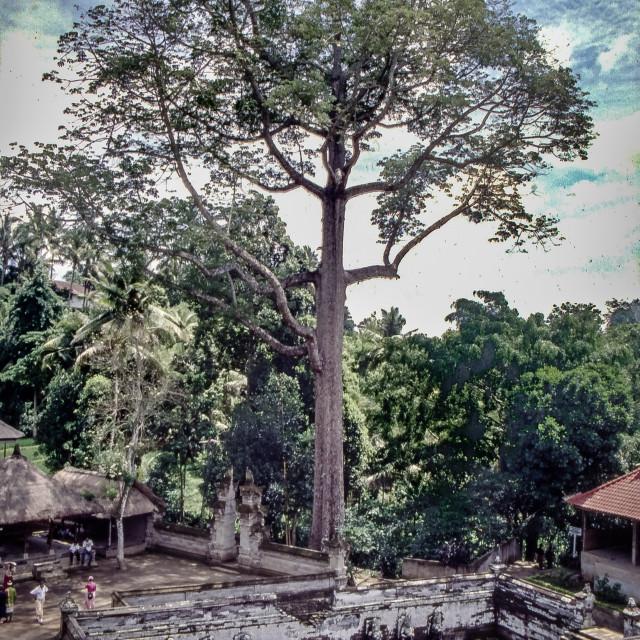 """Goa Gajah temple, Bali"" stock image"