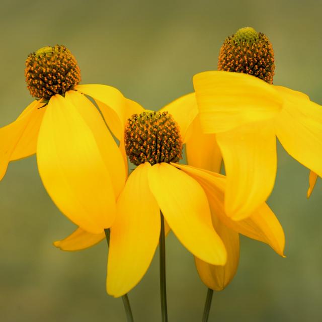 """Yellows"" stock image"