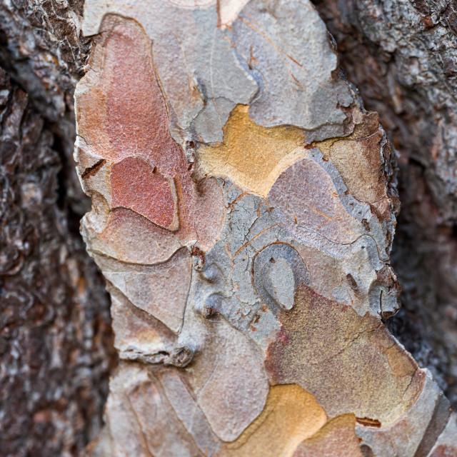 """Tree Bark Texture"" stock image"