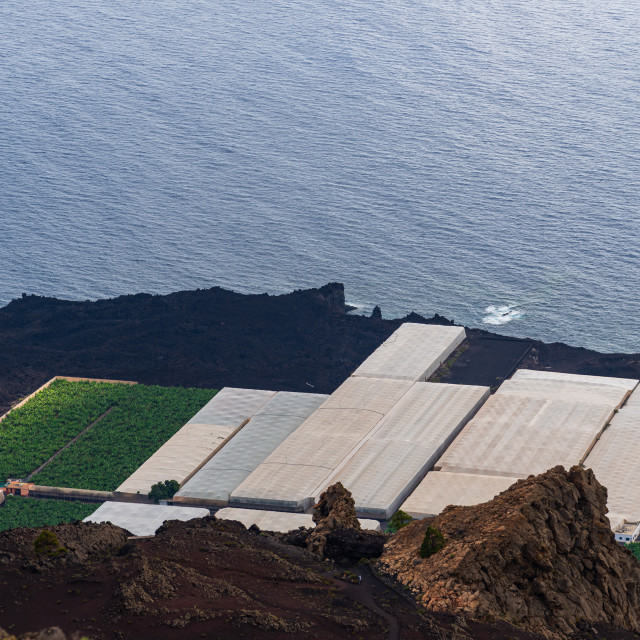 """""""Banana plantation with greenhouses in a volcanic landscape in La Palma"""" stock image"""