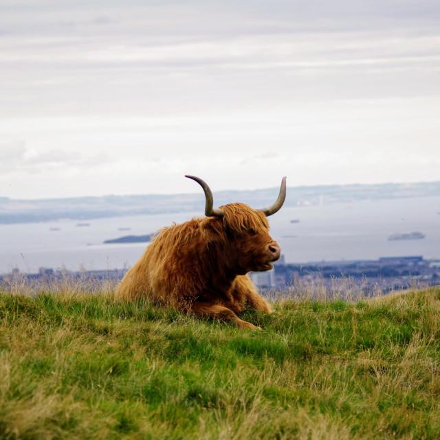 """Best View Of Edinburgh"" stock image"