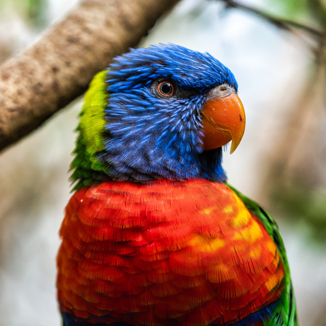 """""""Macaw from Colchester Zoo."""" stock image"""