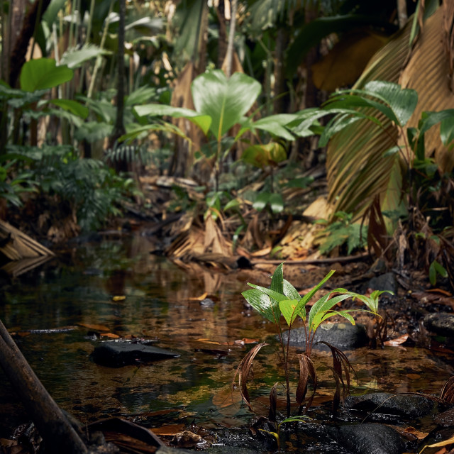 """""""Stream in the middle of jungle"""" stock image"""