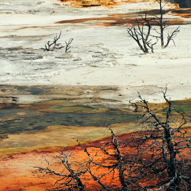 """Wonders Of Yellowstone"" stock image"
