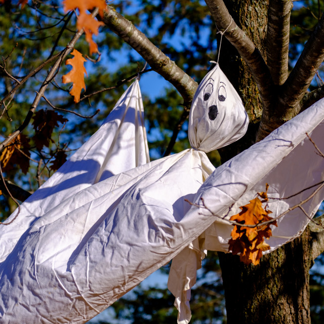 """""""White sheet ghost decoration for Halloween in a tree"""" stock image"""