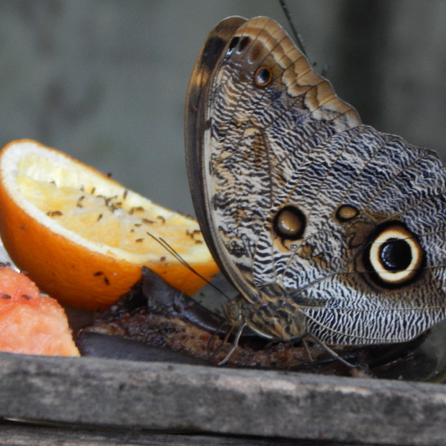 """""""Butterfly Camouflage"""" stock image"""