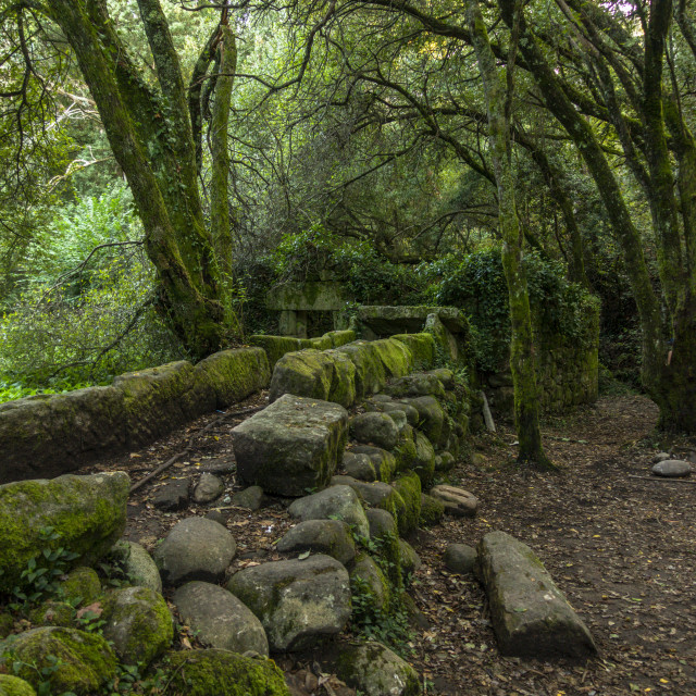 """""""Lush Atlantic forest in Galicia, Spain"""" stock image"""