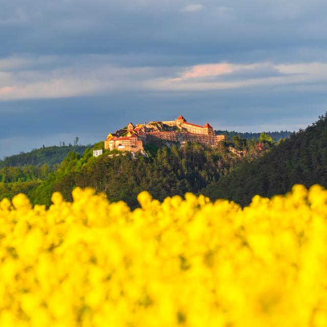 """Rasnov Fortress, Transylvania - Romania and rapeseed field"" stock image"