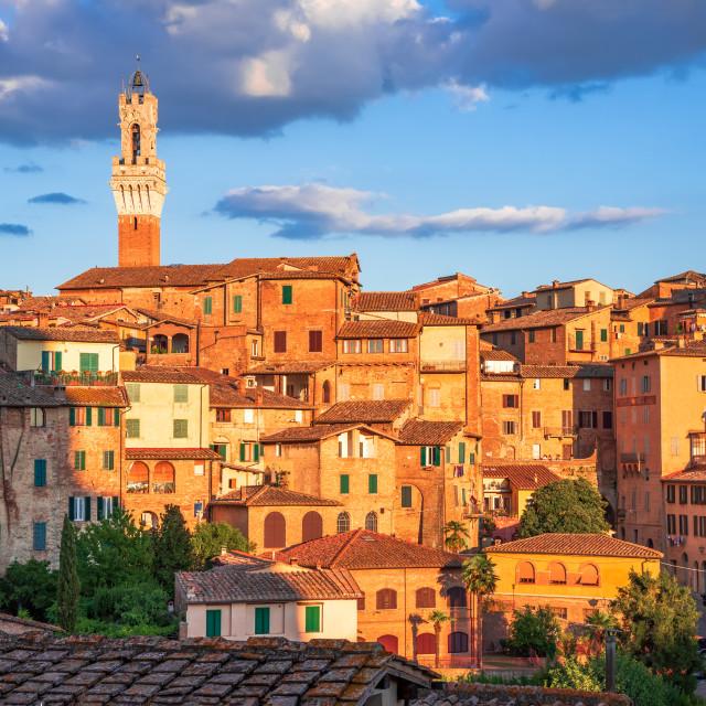 """""""Siena, Tuscany, Italy - Torre del Mangia, sunset light"""" stock image"""