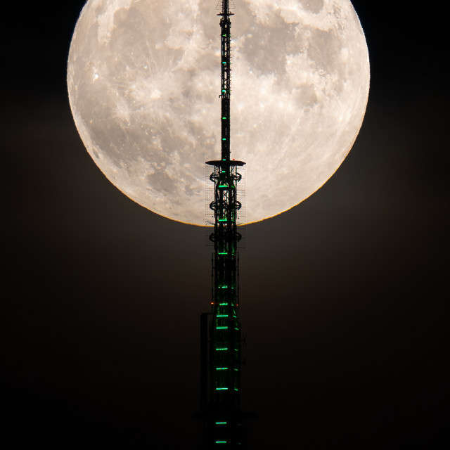 """""""Howl at the moon"""" stock image"""