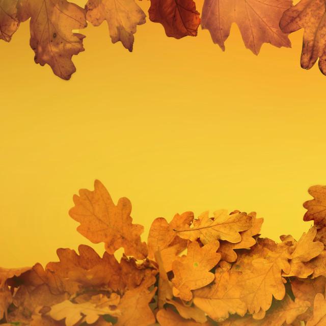 """""""orange autumnal background with leaf of oak tree"""" stock image"""
