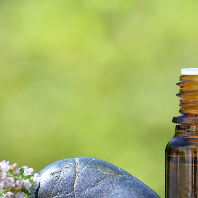 """""""bottles of essential oil and lavender flowers with pebbles on green background"""" stock image"""