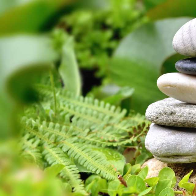"""""""panoramic view on pile of pebbles in front of green plant in a garden"""" stock image"""