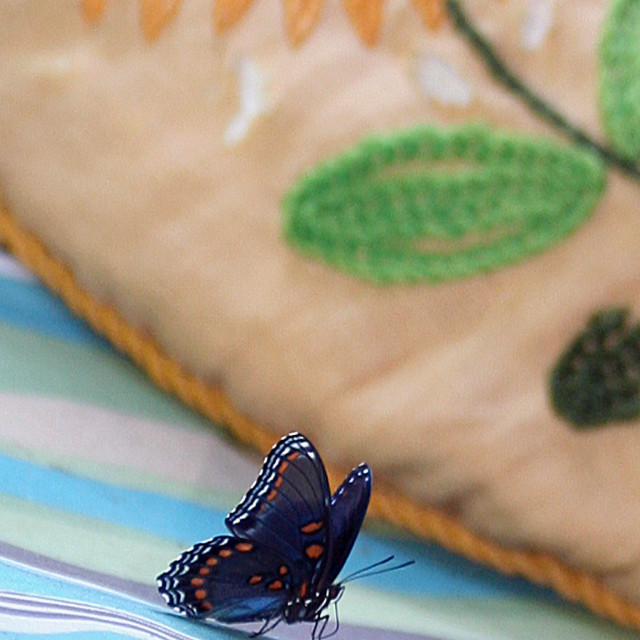 """""""pretty butterfly"""" stock image"""