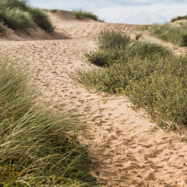 """""""Foot prints leading to Formby beach"""" stock image"""