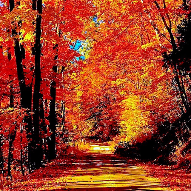 """""""COUNTRY ROAD BRILLIANT FALL FOLIAGE COLOR"""" stock image"""
