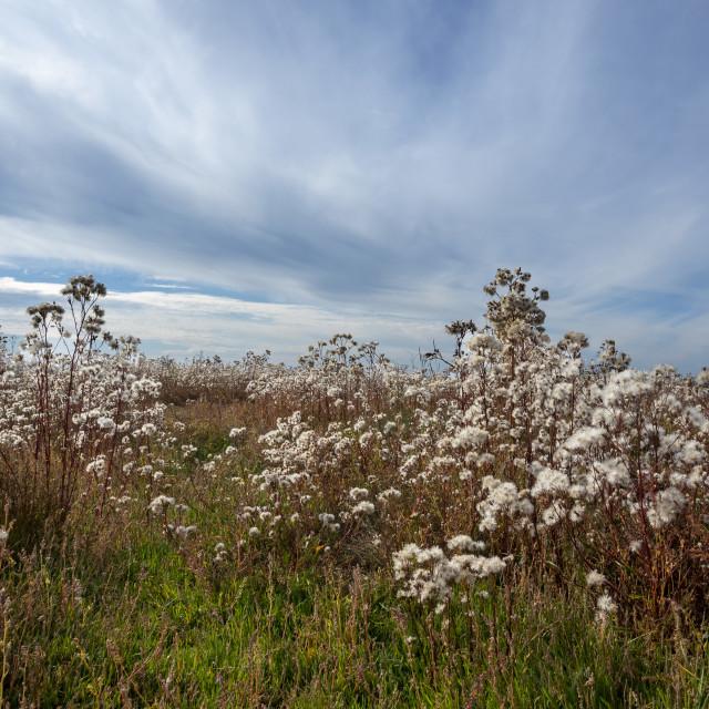 """""""Autumn coastal marsh"""" stock image"""