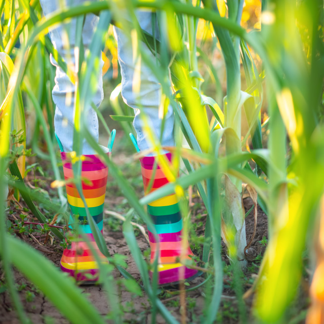 """""""Farmer girl with colorful rubber boots and green plants. Horticu"""" stock image"""