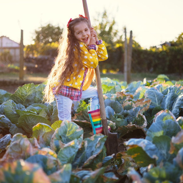 """Happy little girl farmer working in a farmland field of fresh or"" stock image"