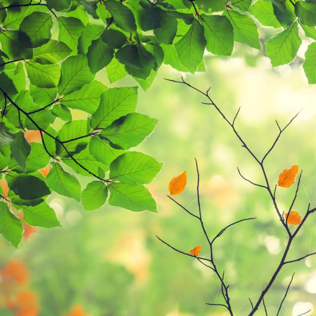 """Autumn landscape. Autumn tree leaves forest background."" stock image"