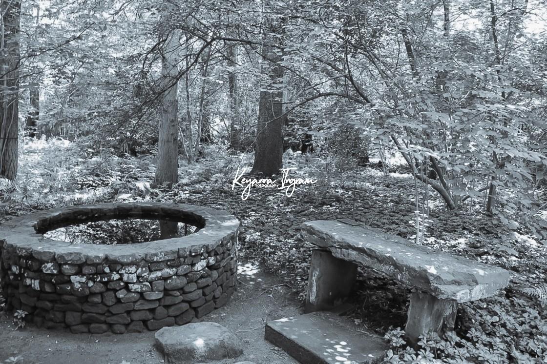 """Willowwood Arboretum"" stock image"