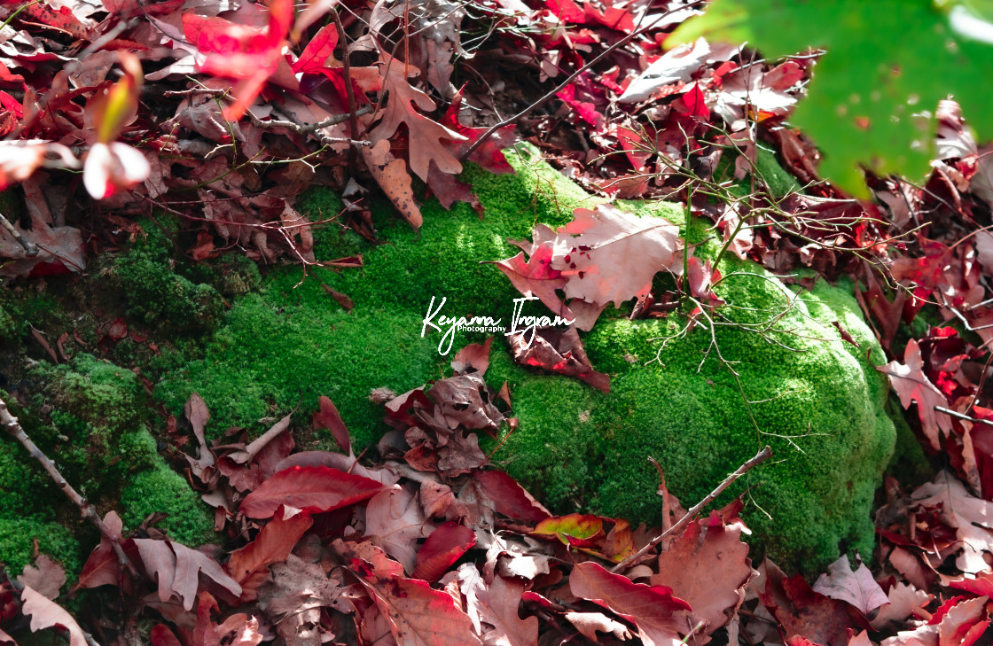 """Falling Leaves"" stock image"