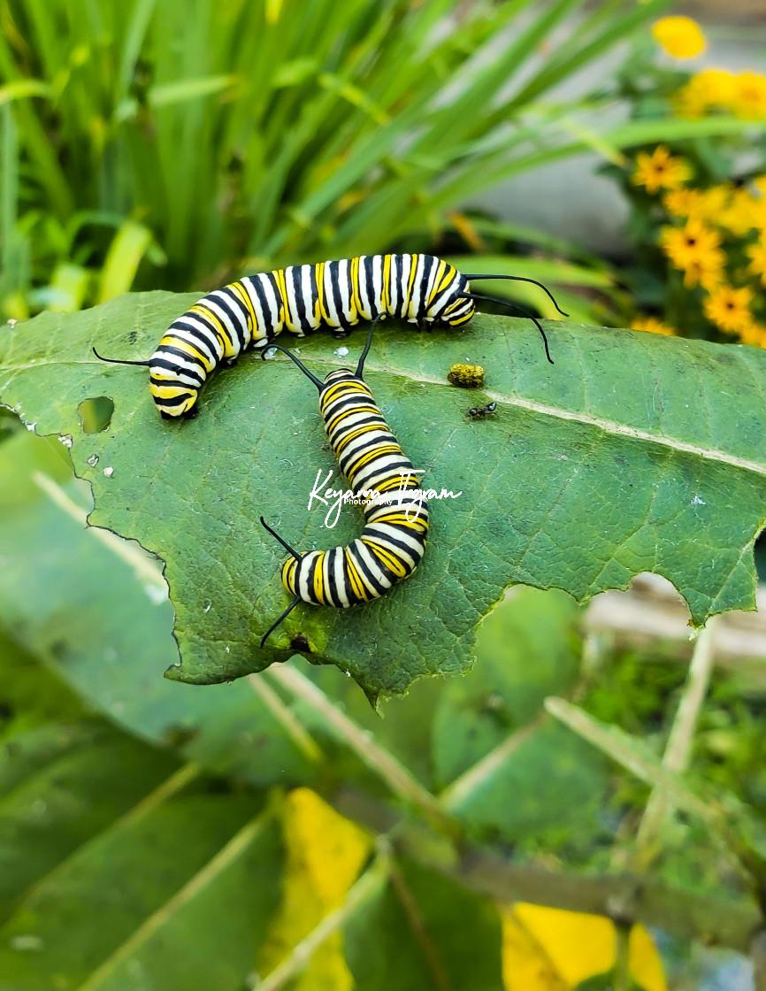 """Caterpillar Buddies"" stock image"