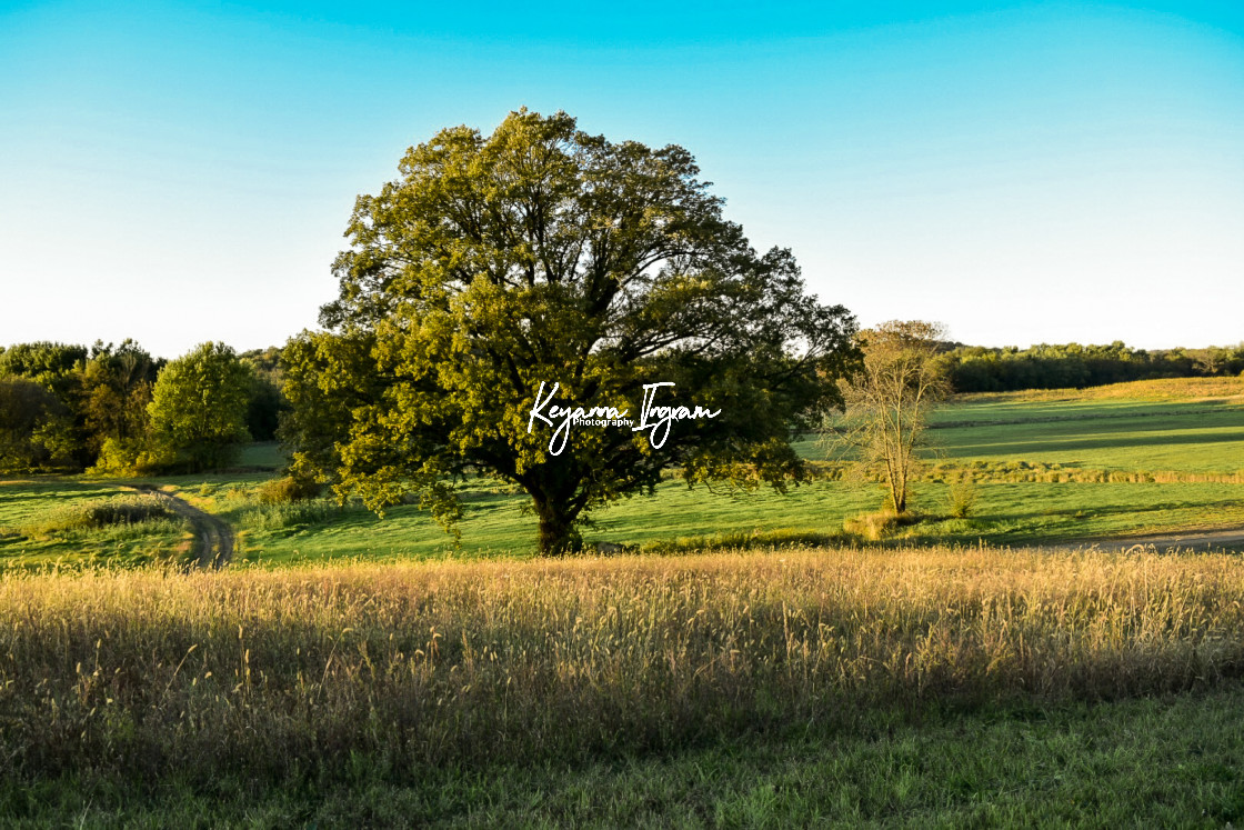 """Sunset Field"" stock image"