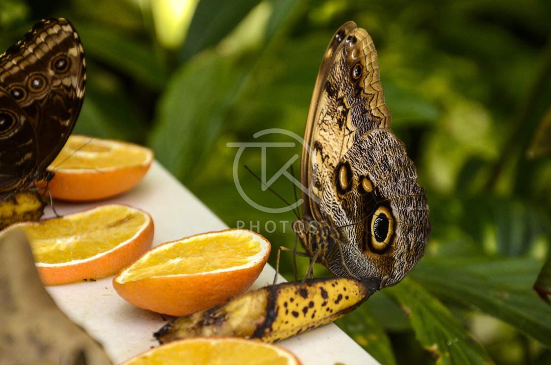 """""""Butterfly Farm, Aruba"""" stock image"""