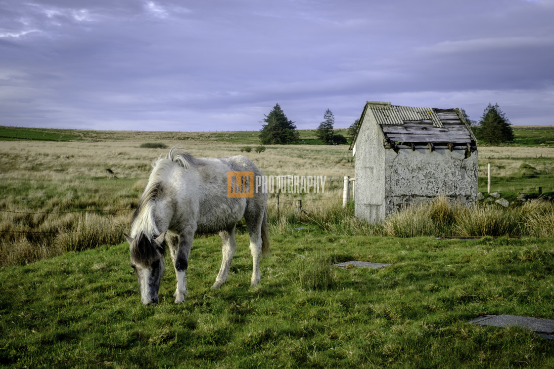 """""""Dartmoor Pony and Shed"""" stock image"""