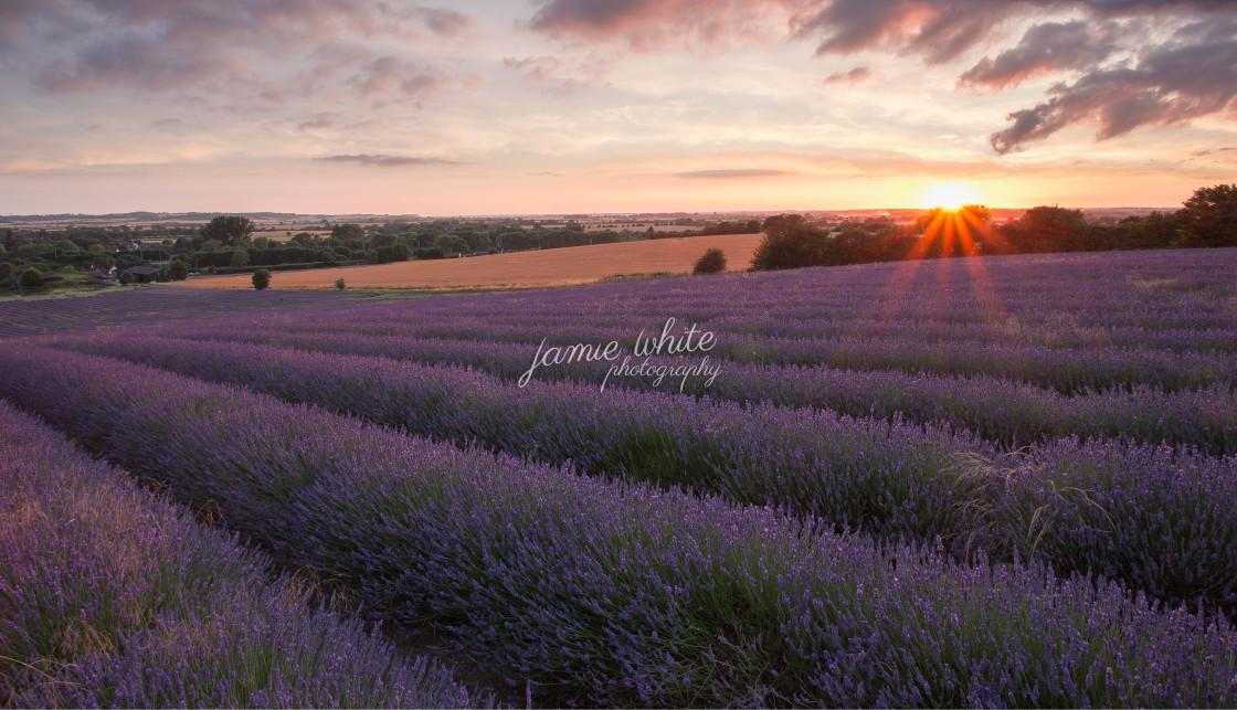 """Lavender Sunset"" stock image"
