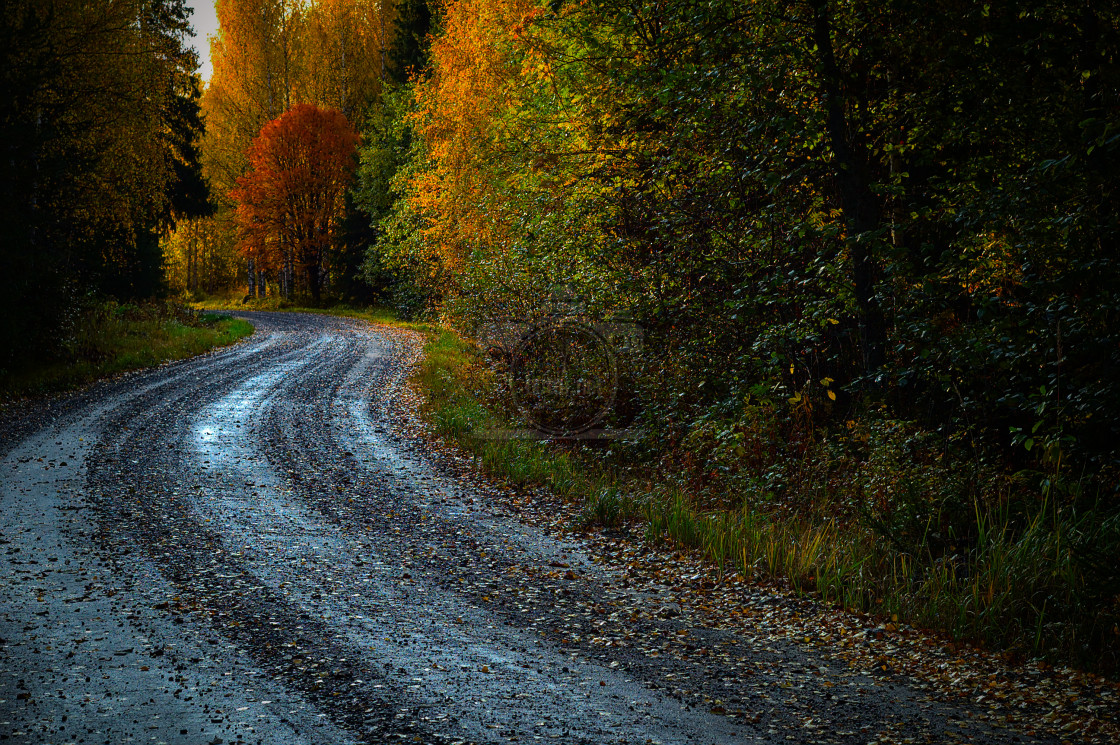 """Country Road"" stock image"