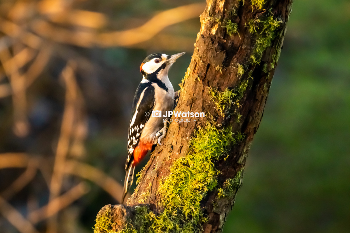 """""""Woody in the Sunshine"""" stock image"""