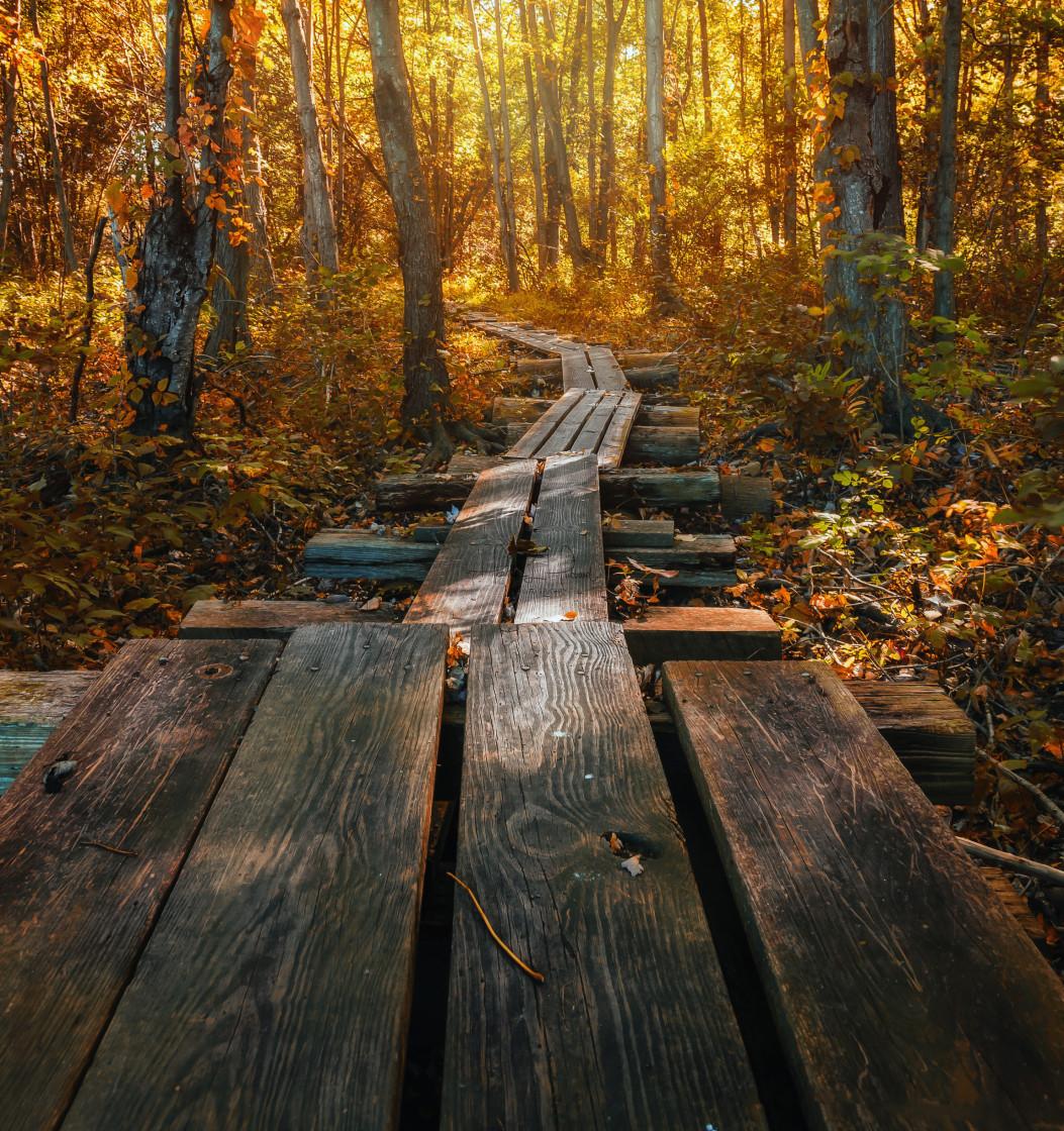 """Walking the Plank"" stock image"