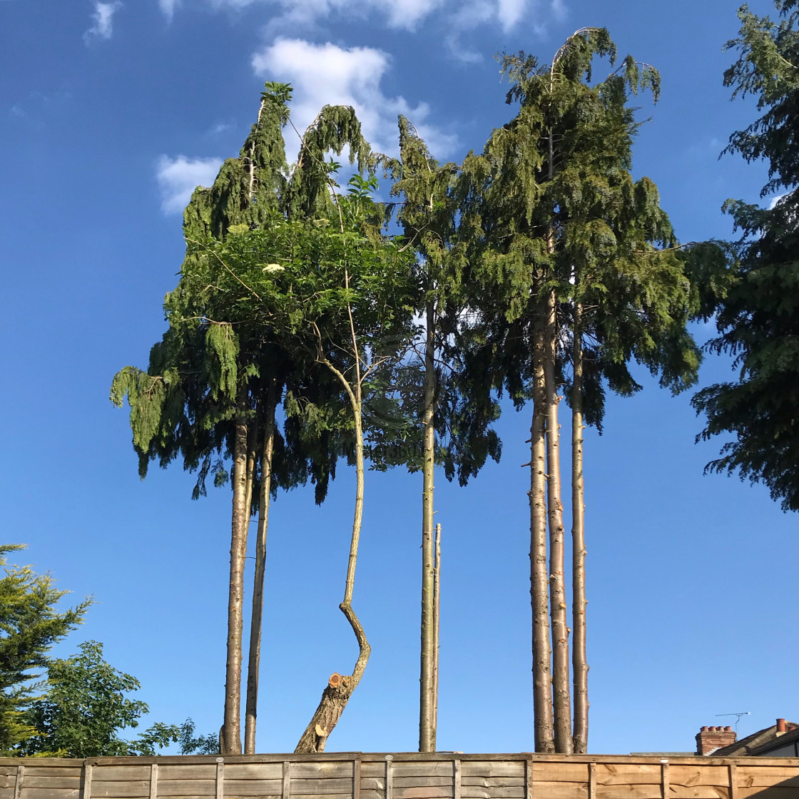 """Warped tree trunk"" stock image"