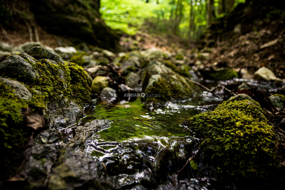"""Water flowing in the forest"" stock image"