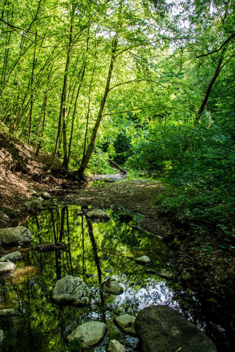 """""""Reflections of trees in water"""" stock image"""
