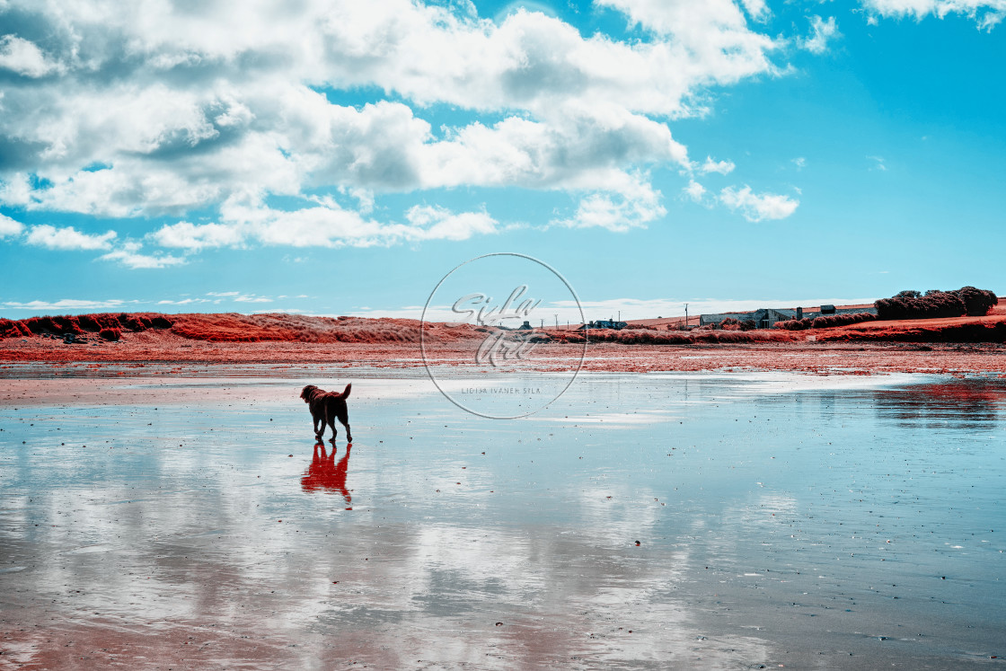 """""""Summer beach in infrared"""" stock image"""