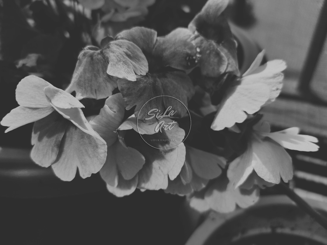 """""""Black and white flowers"""" stock image"""